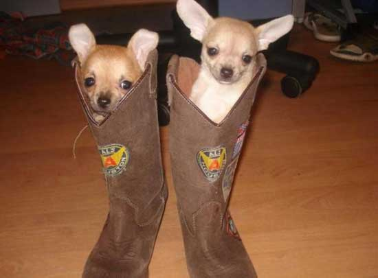 Смешные фото маленьких собак